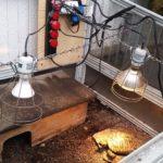Frühbeet-Technik für Griechische Landschildkröten