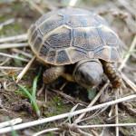 Fast 1 Million Schildkröten als Haustiere