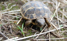 Schildkröte als Haustier