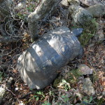 Breitrandschildkröte – Testudo marginata