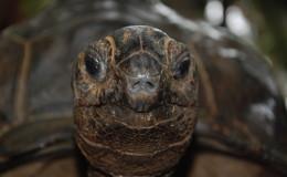 Schildkröte auf Moyenne (Seychellen)