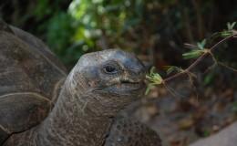 La Digue Seychellen Schildkroeten-007