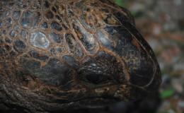La Digue Seychellen Schildkroeten-010