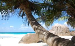 La Digue Seychellen Schildkroeten-019