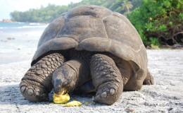 La Digue Seychellen Schildkroeten-029