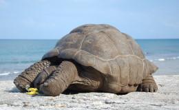 La Digue Seychellen Schildkroeten-032