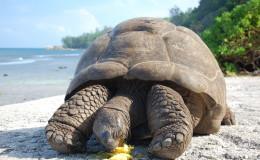 La Digue Seychellen Schildkroeten-033