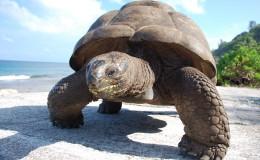 La Digue Seychellen Schildkroeten-035