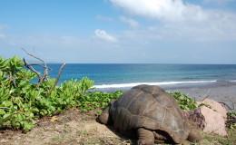La Digue Seychellen Schildkroeten-037