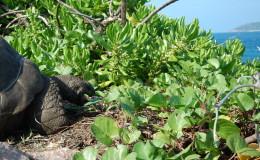 La Digue Seychellen Schildkroeten-039
