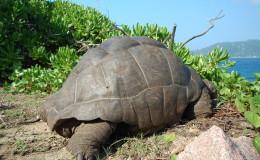 La Digue Seychellen Schildkroeten-042
