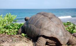 La Digue Seychellen Schildkroeten-044