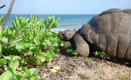 La Digue Seychellen Schildkroeten-046