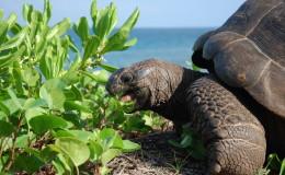 La Digue Seychellen Schildkroeten-047