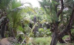 La Digue Seychellen Schildkroeten-050