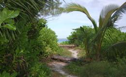 La Digue Seychellen Schildkroeten-054