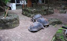 Seychellen-Moyenne-003