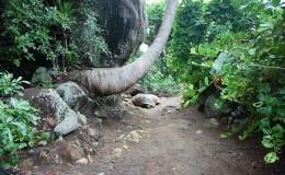 Seychellen-Moyenne-015