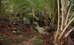 Seychellen-Moyenne-027