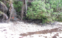Seychellen-Moyenne-030