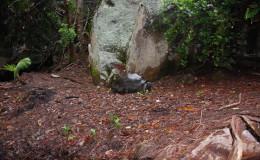 Seychellen-Moyenne-033