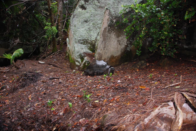 Beleuchtung Schildkröten Frühbeet | Seychellen Moyenne 033