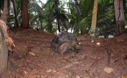 Seychellen-Moyenne-035