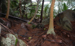 Seychellen-Moyenne-037