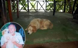Seychellen-Moyenne-048-Hund von Brendon Grimshaw-2