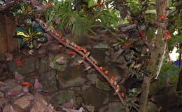 Seychellen-Moyenne-051-Madagaskarweber und Madagaskartauben