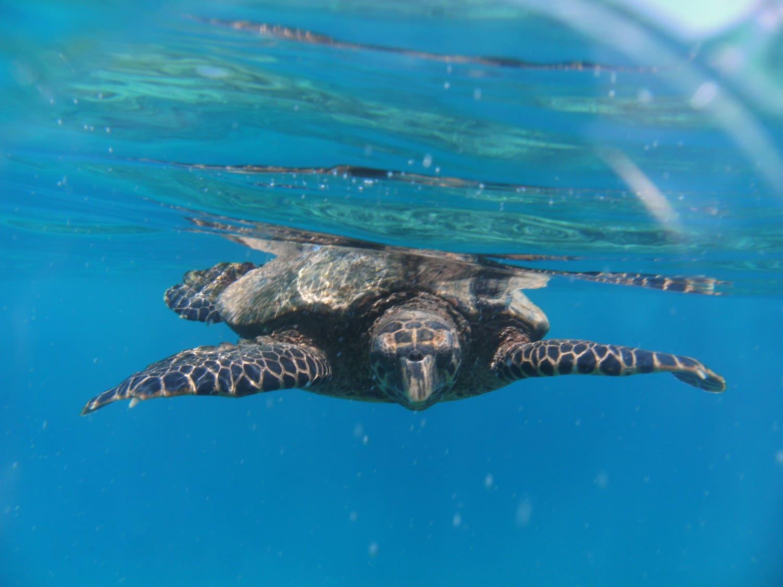 Seychellen  Fotos Freilebender Riesenschildkr U00f6ten