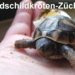 Schildkrötenzüchter