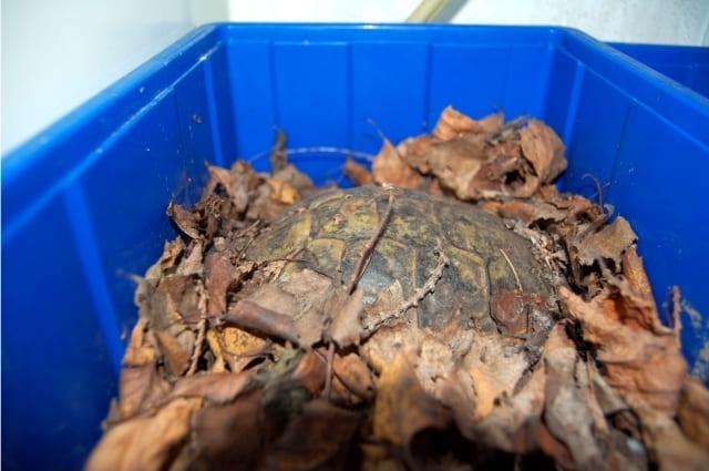 Kleiner Kühlschrank Für Schildkröten : ▷ winterstarre winterschlaf winterruhe griechische