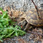 Was fressen Schildkröten?