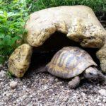 Schildkrötenhaus, Schildkrötenhöhle, Landschildkröten Höhle