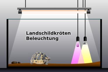 Beleuchtung für Landschildkröten