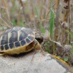 Babyschildkröte in Winterschlaf?
