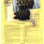 EU-Bescheinigung, Fotodokumentation (vormals CITES)