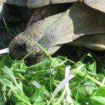 Hören, Sehen, Riechen und die Haut von Schildkröten