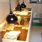 Terrarium für Landschildkröten