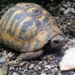Landschildkröte vermisst in Stuttgart-Zuffenhausen