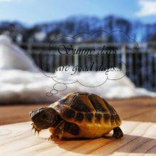 Kleine Griechische Landschilkröte genießt erste Sonnenstrahlen