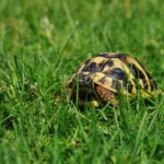 Schildkröte des Monats Oktober 2017