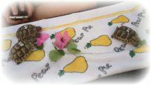 Maurische Landschildkröten beim Frühstück