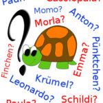 ▷ Schildkrötennamen - die 466 beliebtesten Namen für Schildkröten