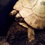Schildkröte gräbt sich nicht ein?