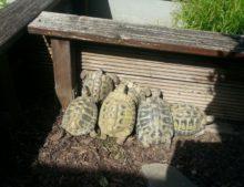 Meine Männer beim morgendlichen Sonnenbaden.