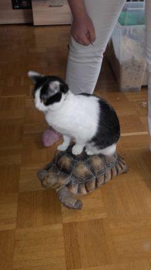 Tante Käthe auf paul