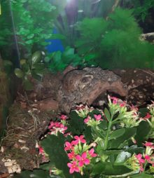 Chip unsere Dosenschildkröte hält ausschau nach Futter
