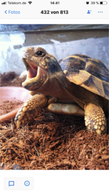 Müde Schildkröte